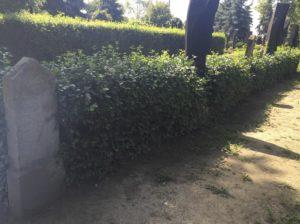 A Kölcsey-család síremlékei